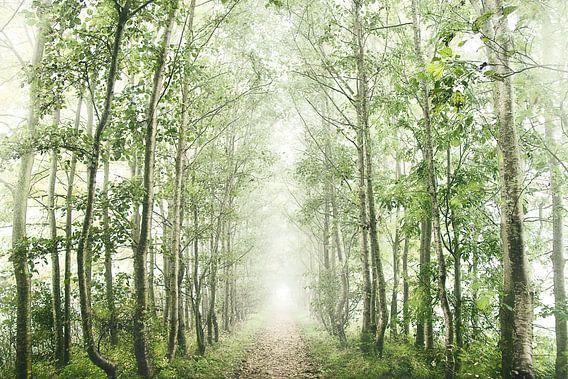 Mistig bos landschap