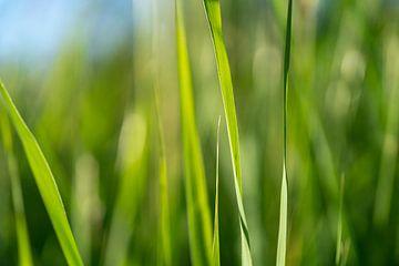 Grassprieten Achtergrond