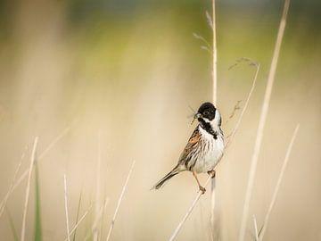 Vogel de rietgors van Wendy Tellier - Vastenhouw