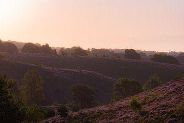 goldene Stunde über der Heide von Tania Perneel
