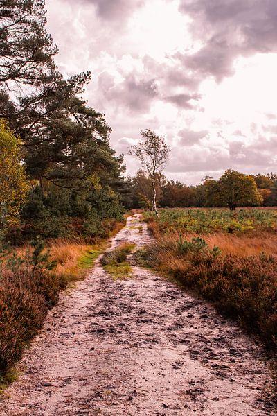 Herfstglorie van de Veluwe - Pad nr. 4 van Deborah de Meijer