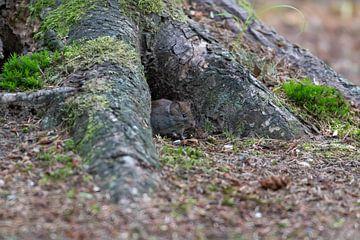 Maus von Merijn Loch