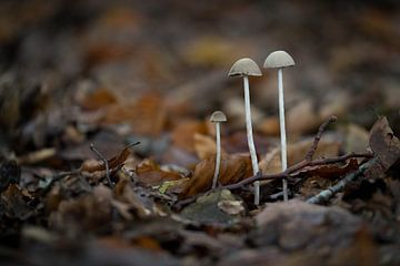 Drie paddenstoeltjes - Oosterbeek van Gerda Hoogerwerf