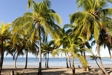Costa Rica von René Schotanus