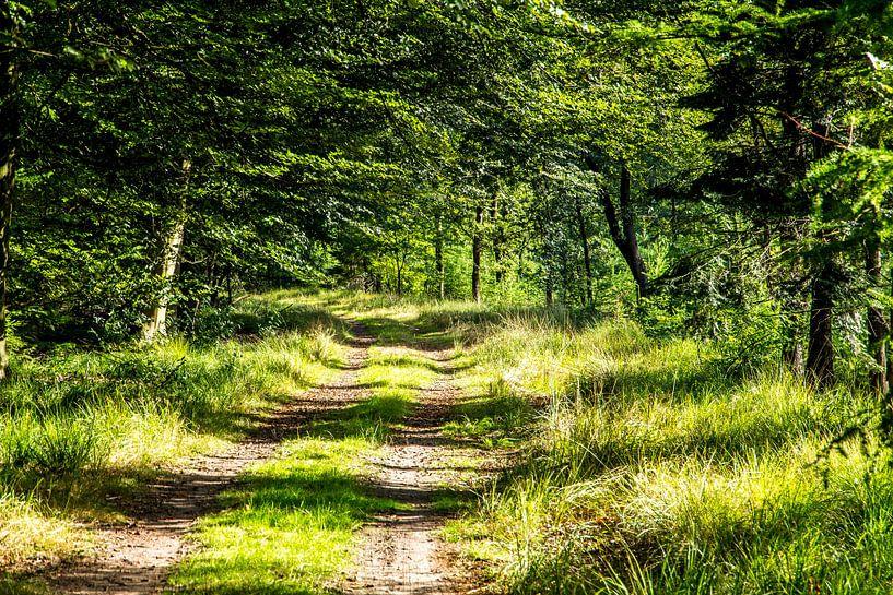 Wandelpad in bos in Drents-Friese Wold van Jaap Mulder
