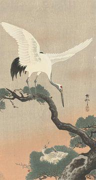 Japanse kraanvogel op tak van pijnboom van Ohara Koson