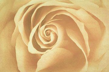 Rose van Marianne Twijnstra-Gerrits
