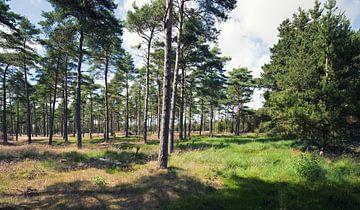 Wald von BVpix