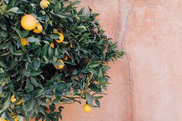 Tropische Orangen | Marokkanische Reisefotografie | Kunstdruck von Yaira Bernabela