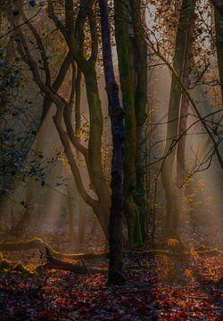 L'automne dans la forêt vénérée sur Eelke Brandsma