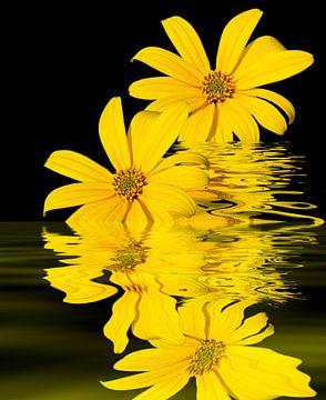 Gelbe Blüten van Martina Fornal