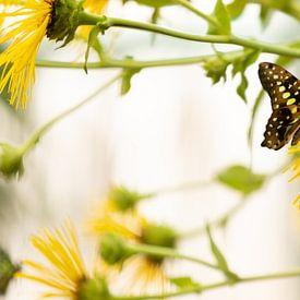 Tropische vlinder op gele bloem van Marijke van Eijkeren