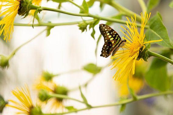 Tropische vlinder op gele bloem