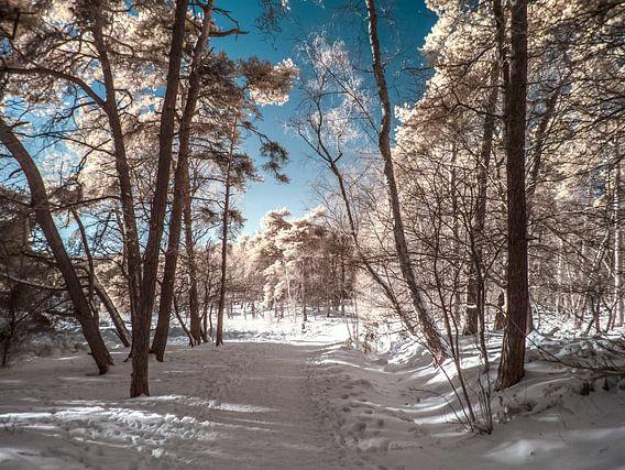 Op een koude winterdag
