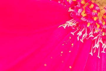 Fleurs printanières colorées rose pourpre extrême sur Marieke Feenstra