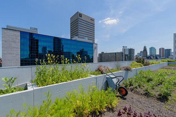 Rotterdam centrum, DakAkker Zuid Holland, Netherlands van Martin Stevens