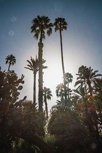 Palmbomen in de zon van Wendy van Aal