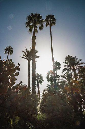 Palmbomen in de zon