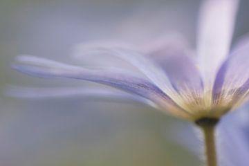 Des couleurs douces au printemps sur Margreet Piek