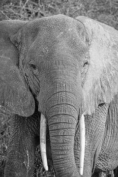 Elefant, Kenia von Jan Fritz