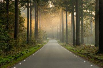 Een lege weg in het bos op een vroege mistige ochtend van Anges van der Logt