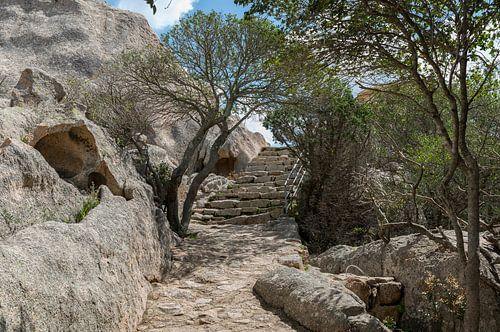 bomen en trap van oude stenen in italie van