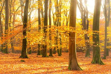 Forêt brumeuse lors d'une belle matinée d'automne brumeuse sur