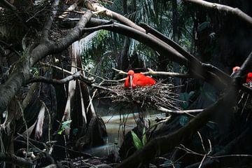 Red Bird sur Toekie -Art