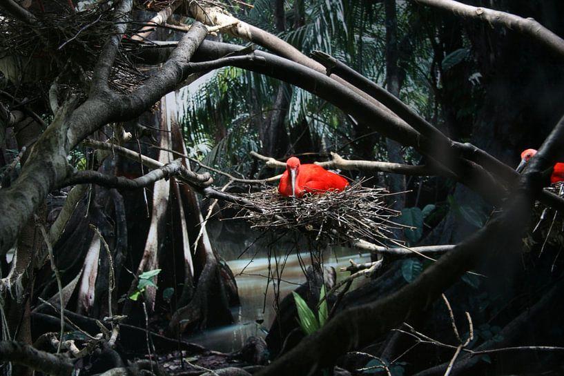 Red Bird van Toekie -Art
