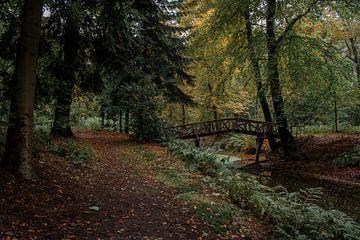 Eenzaam bos van Kevin Oudman