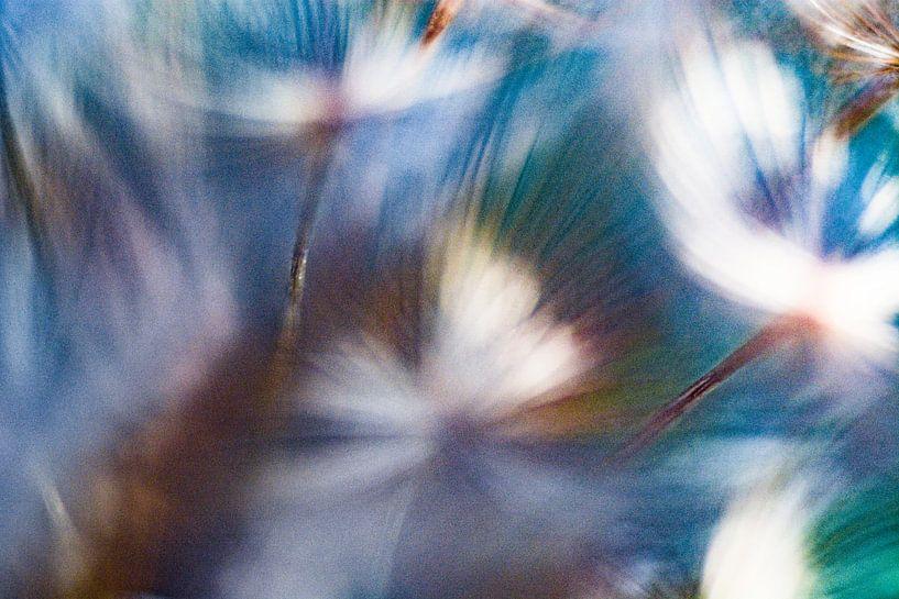 Flowerpower van Nanda Bussers