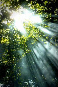 Voice of God2 von Forestia Arts