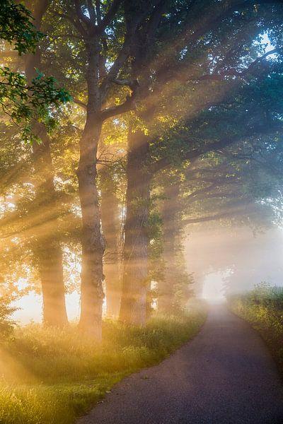 Rayons de soleil dans le brouillard matinalPays-Bas, s-Graveland, Arbres le long d'un chemin de camp sur Frans Lemmens