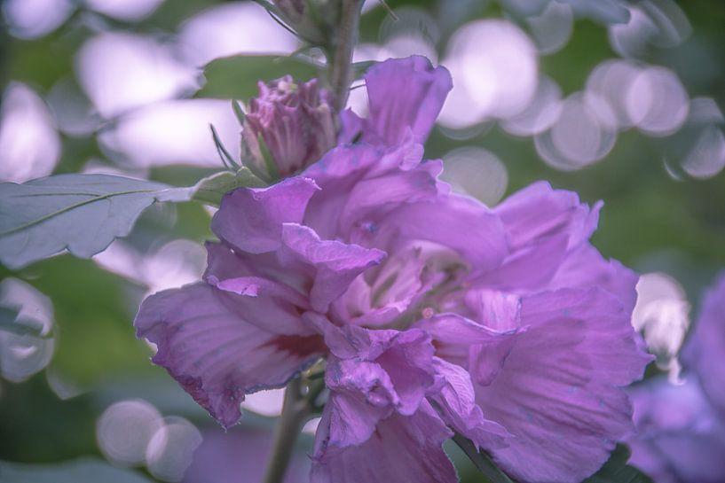 purple pink girl  van Ettie van der Meulen-Vermaning