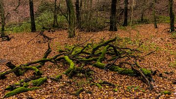 Waldspaziergang 3 van Dirk Herdramm