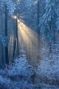 Zon schijnt door de bomen in het bos bedekt met rijp, Leende, Nederland van Nature in Stock