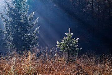 Blessed tree sur Olha Rohulya