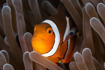 Nemo sur Linda Raaphorst