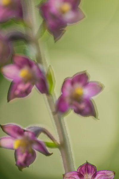 Paarse bloemen van Douwe Schut