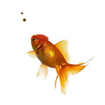 Fishy van Nynke van Holten