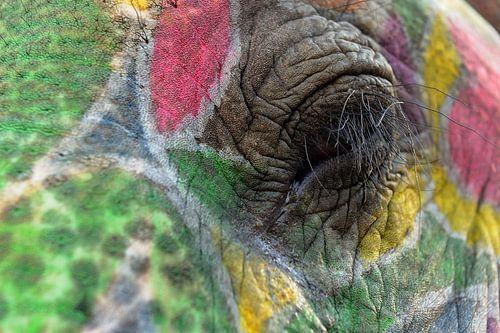 Oog van olifant tijdens Holifeest van Gonnie van de Schans
