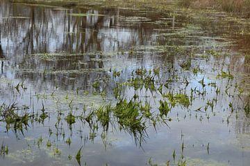 Teich nach dem Winter von Gewoon een mooi plaatje