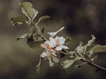 Blüte von José Lugtenberg