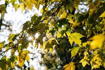 avond zon in oktober van mick agterberg