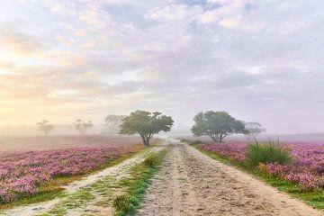 Zonsopkomst op de paarse hei van Ad Jekel