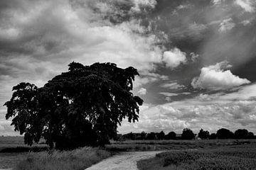Boom in landschap. van Edwin Harpe