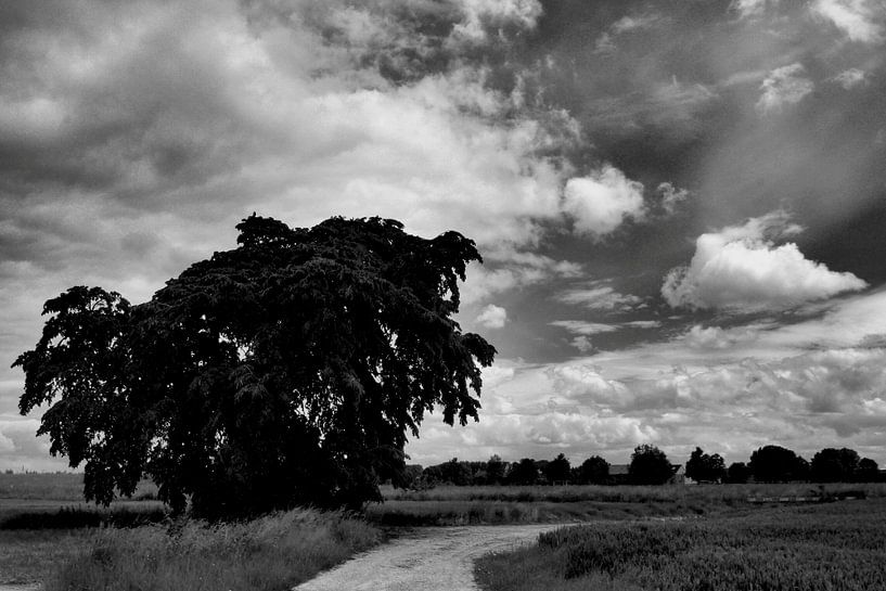 Boom in landschap. sur Edwin Harpe