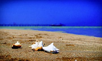Tropisch Strand von Koen Lambooij