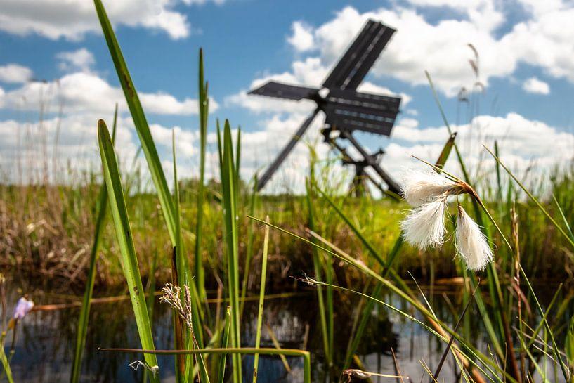 Witte pluizig bloeiende moerasplanten  in Nederland van Fotografiecor .nl