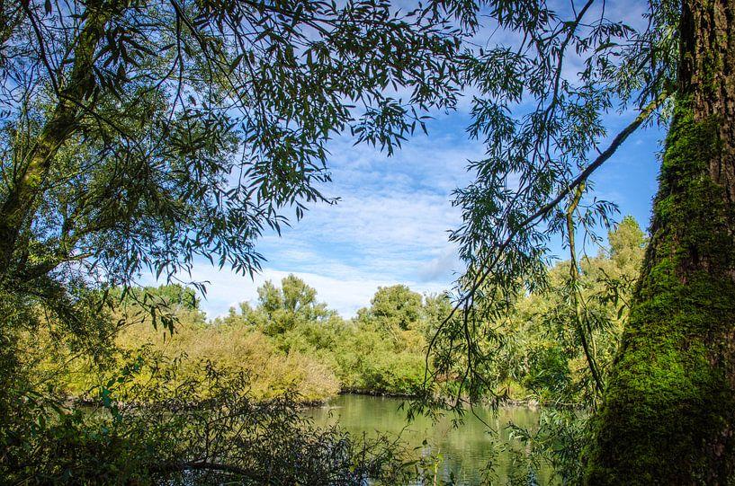 Uitzicht vanuit de Biesbosch sur Ricardo Bouman